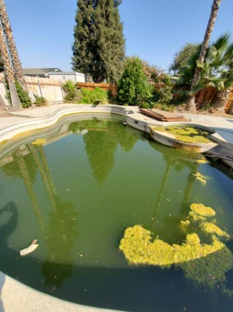 Full green, unmaintained swimming pool