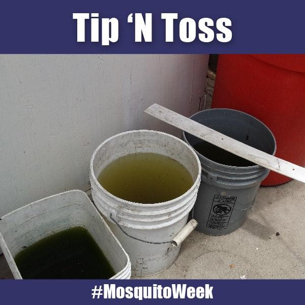 buckets, mosquito breeding source