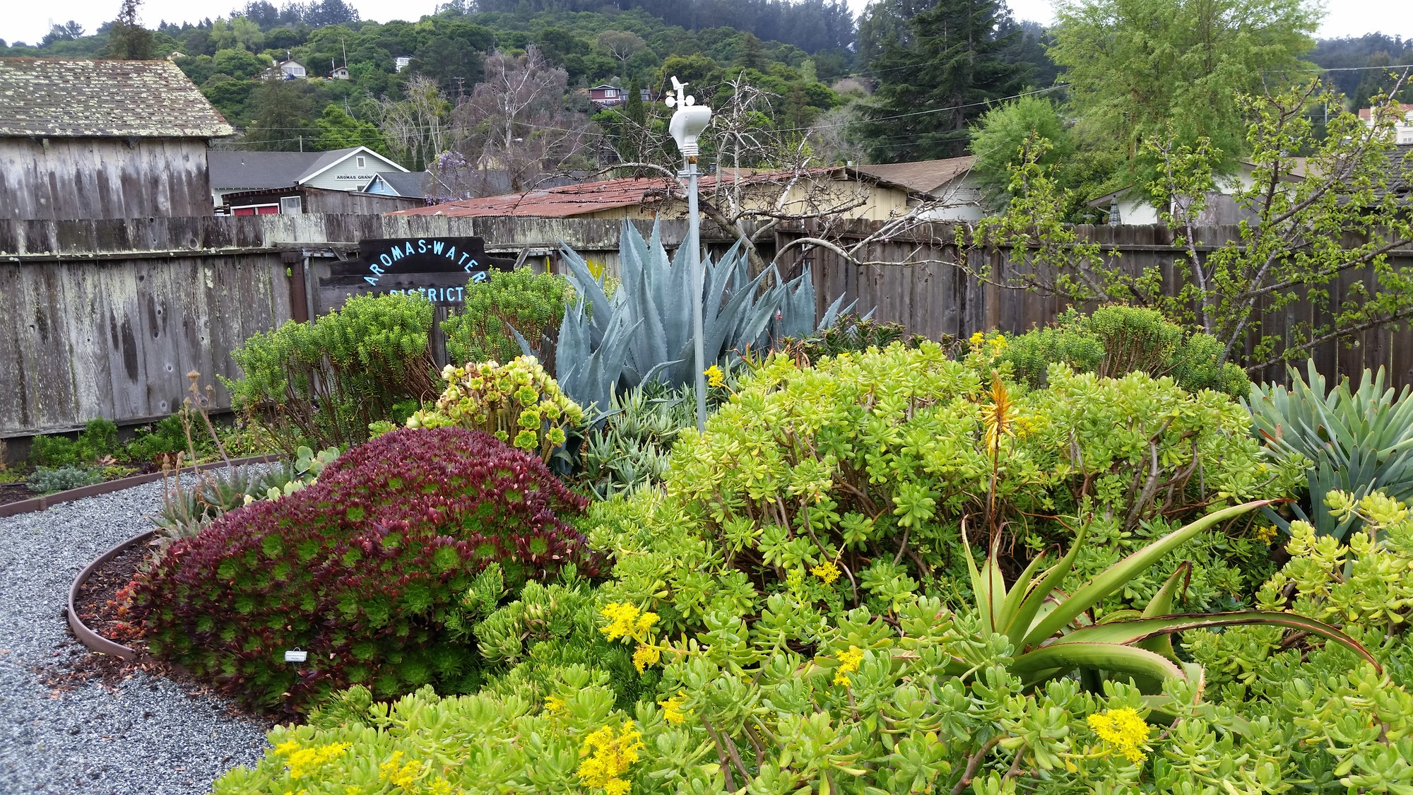 Aromas Water Drought Tolerant Garden