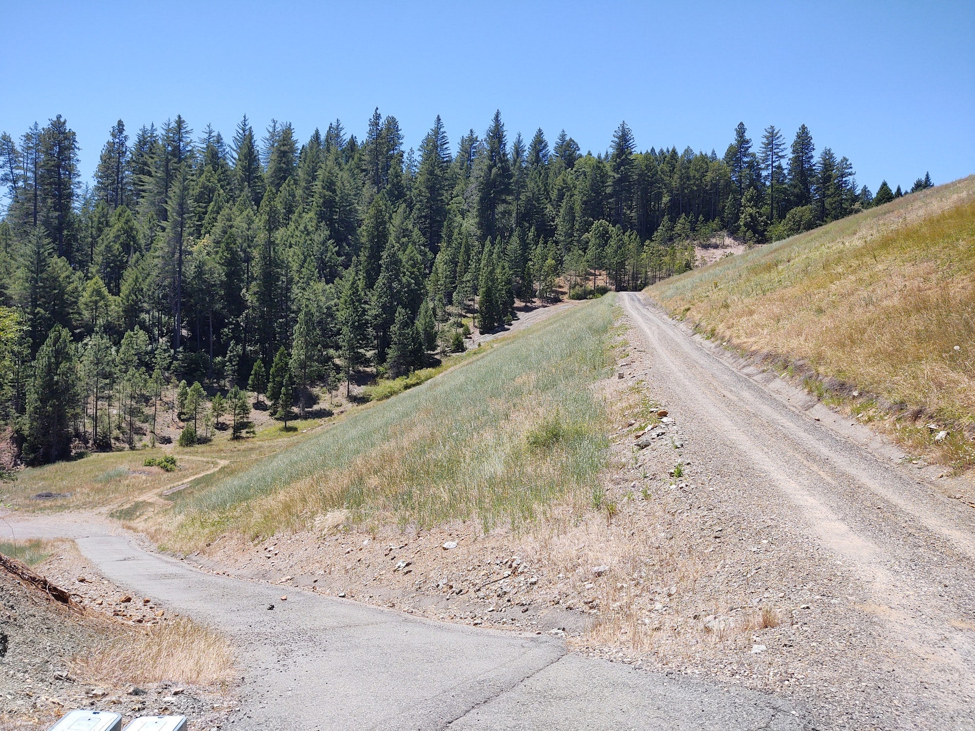 May contain: fir, abies, tree, plant, gravel, dirt road, road, and conifer