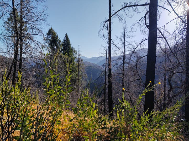 Views of the beautiful canyon and conifers