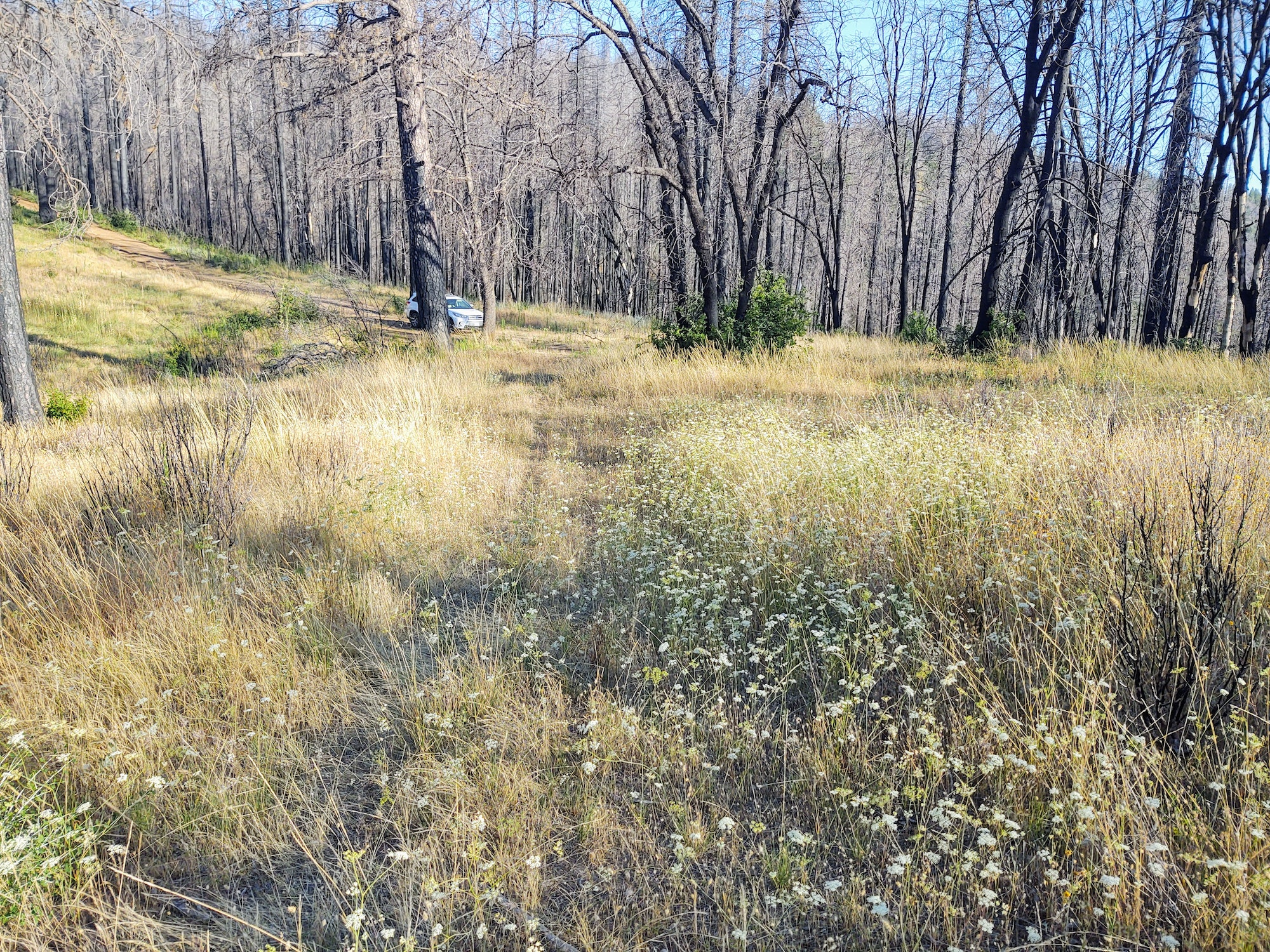 Future trail location through grassland and forest