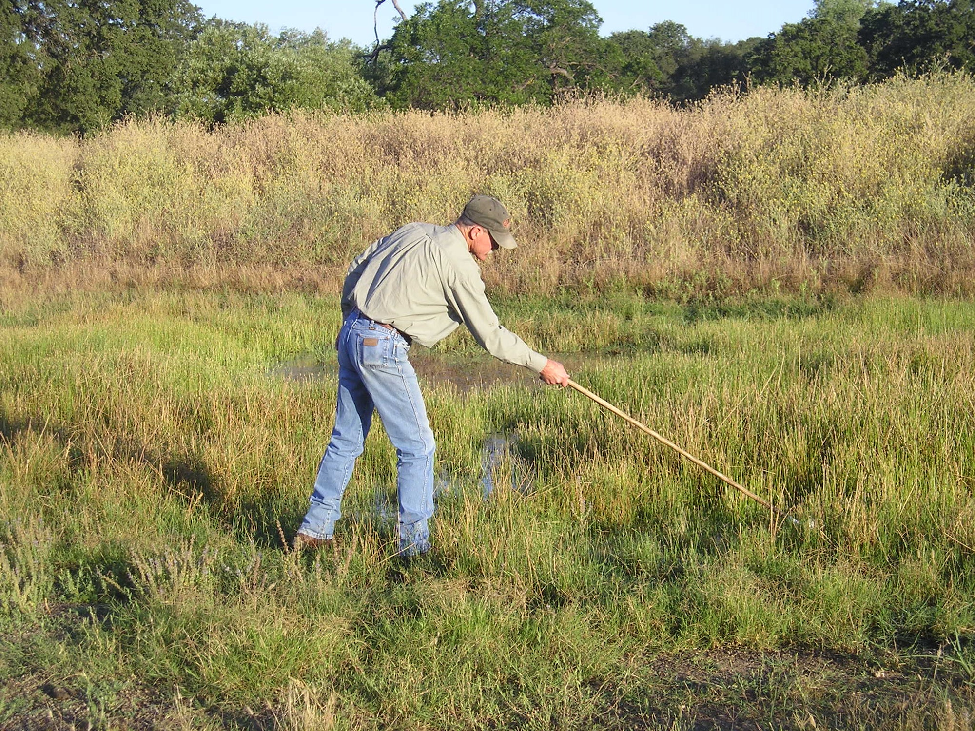 Technician,Mike Robinson dipping water to check for mosquito larvae