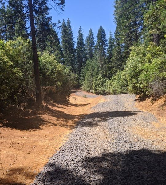 May contain: tree, plant, fir, abies, path, gravel, dirt road, road, and conifer