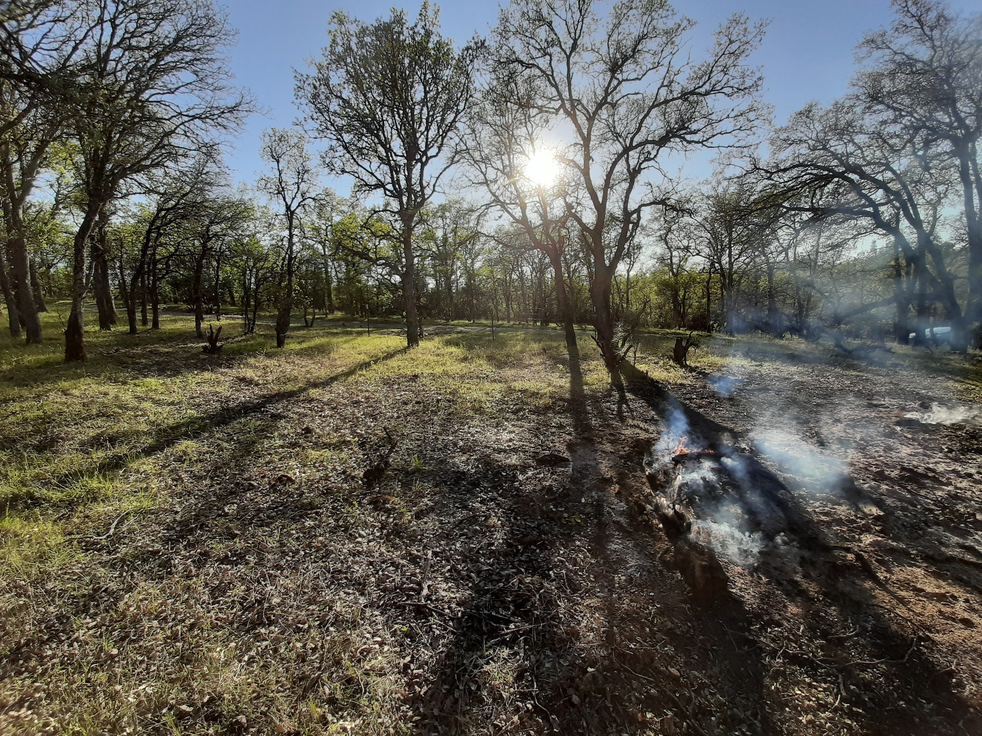 Gentle smoke rises from very low flame creeping through an open blue oak woodland.