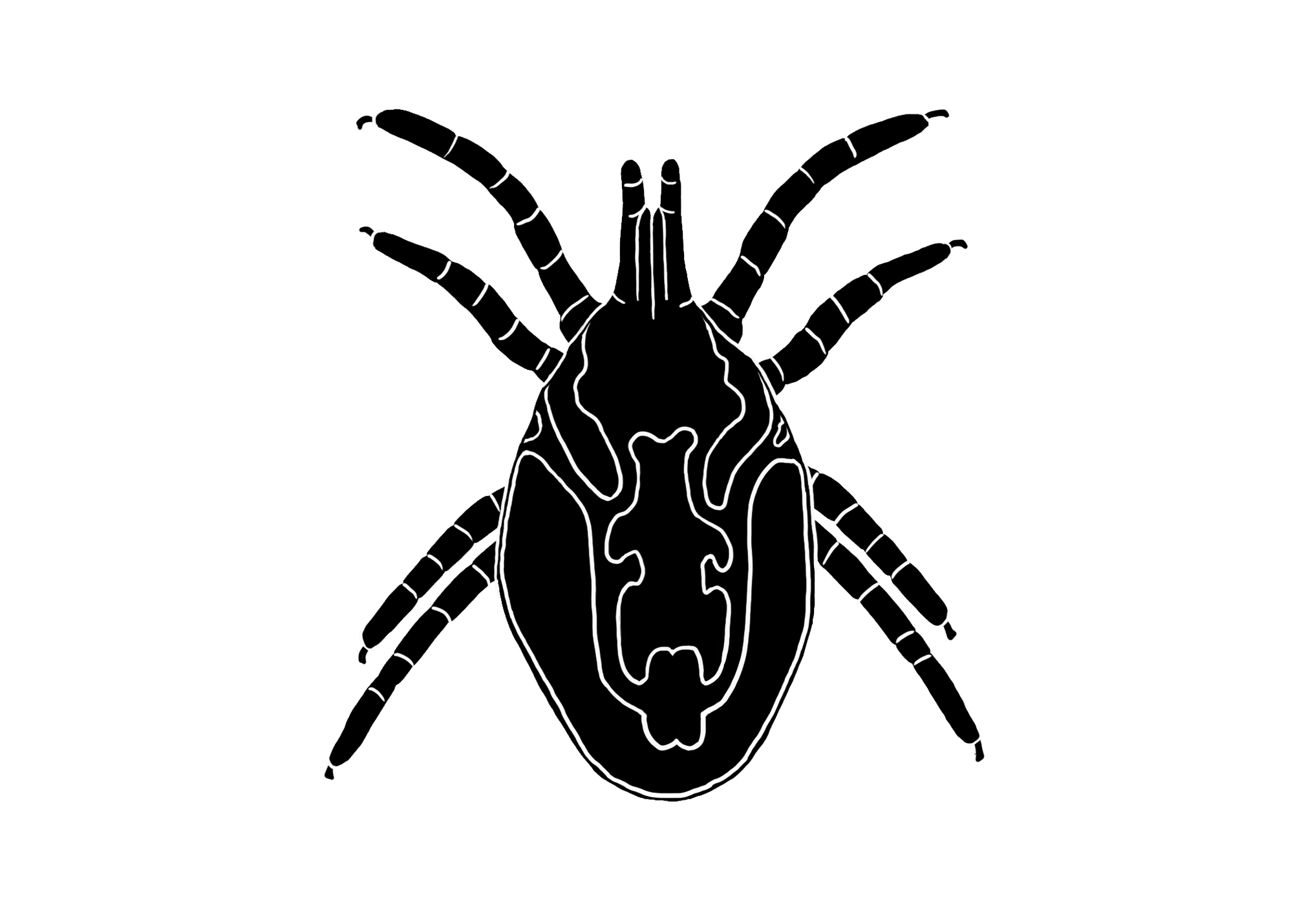 Top-down view of a rat mite outline, colored in completely black, with a few white lines showing what the squiggly digestive tract looks like inside the mite. The mite has 8 legs - two pairs are on the front end of its body and two pairs are on the back end.