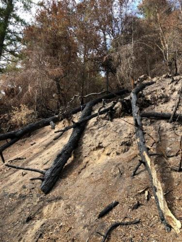 Bare ground with burned, downed tree trunks in the foreground and standing, but brown, trees in the background.