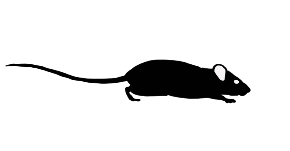 Side view of an all-black icon of a rat. The rat's tail is longer than its body (it is a roof rat).