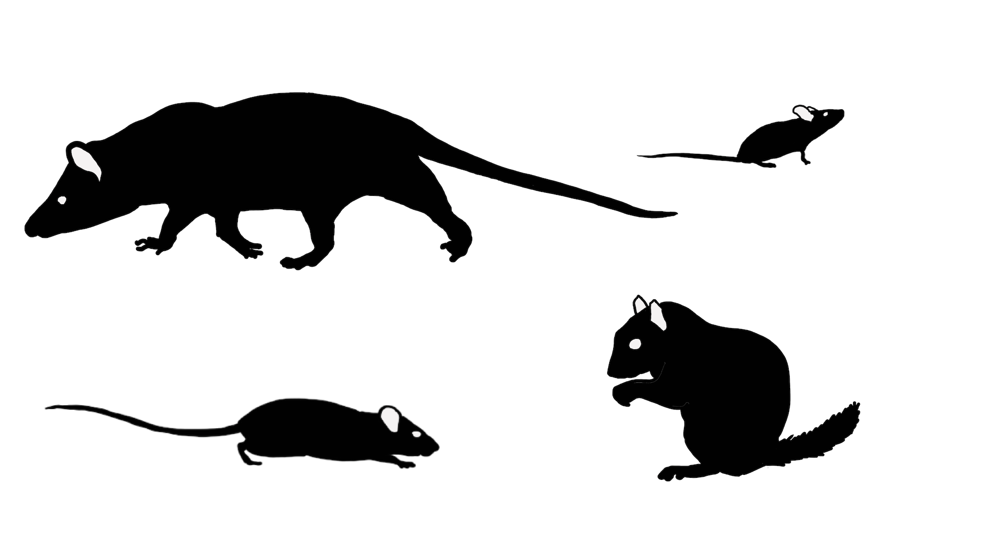 Side black silhouettes of four animals. An opossum, a mouse, a rat, and a squirrel
