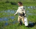 Person in a marshy area with water and green vegetation.  The person is wearing a tan District uniform, safety glasses, gloves, and waders.  The person is holding a large bottle with a hose and is spraying the marsh.