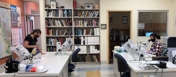 Large room with bookshelf, office door, bug specimens, and microscopes.  Two people are wearing cloth masks and working - one is cleaning a table top and the other is looking in a microscrope.