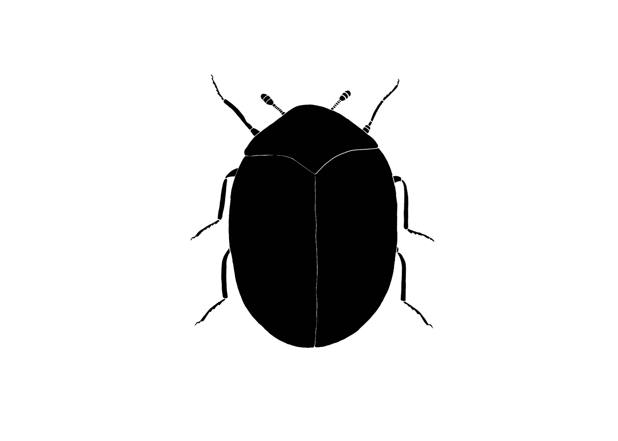A top-down view of a carpet beetle.  The beetle outline is completely shaded in black. The beetle is an oval shape, with two short antennae on the head and 6 short legs.