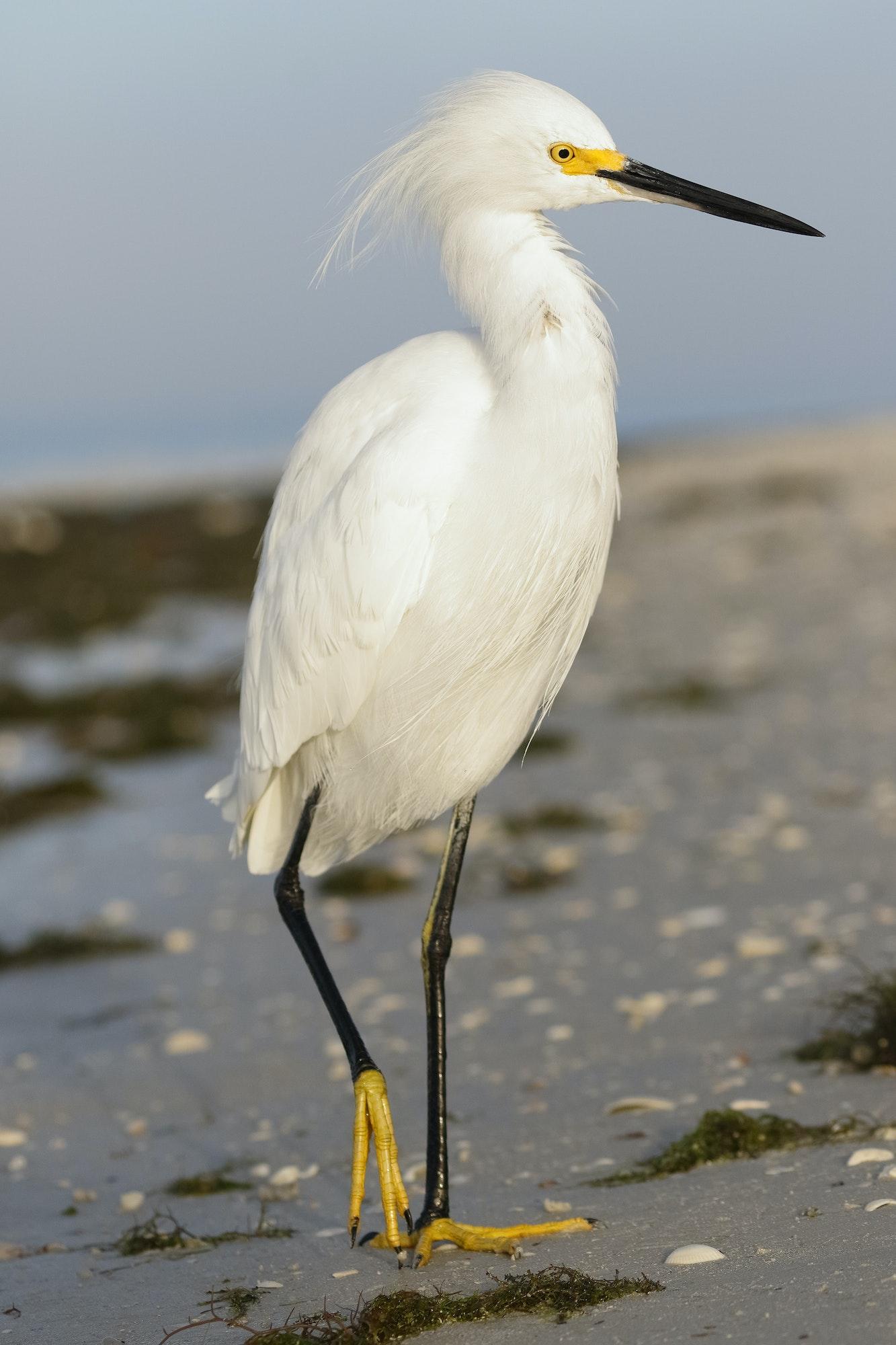May contain: bird, animal, waterfowl, heron, ardeidae, egret, crane bird, and stork