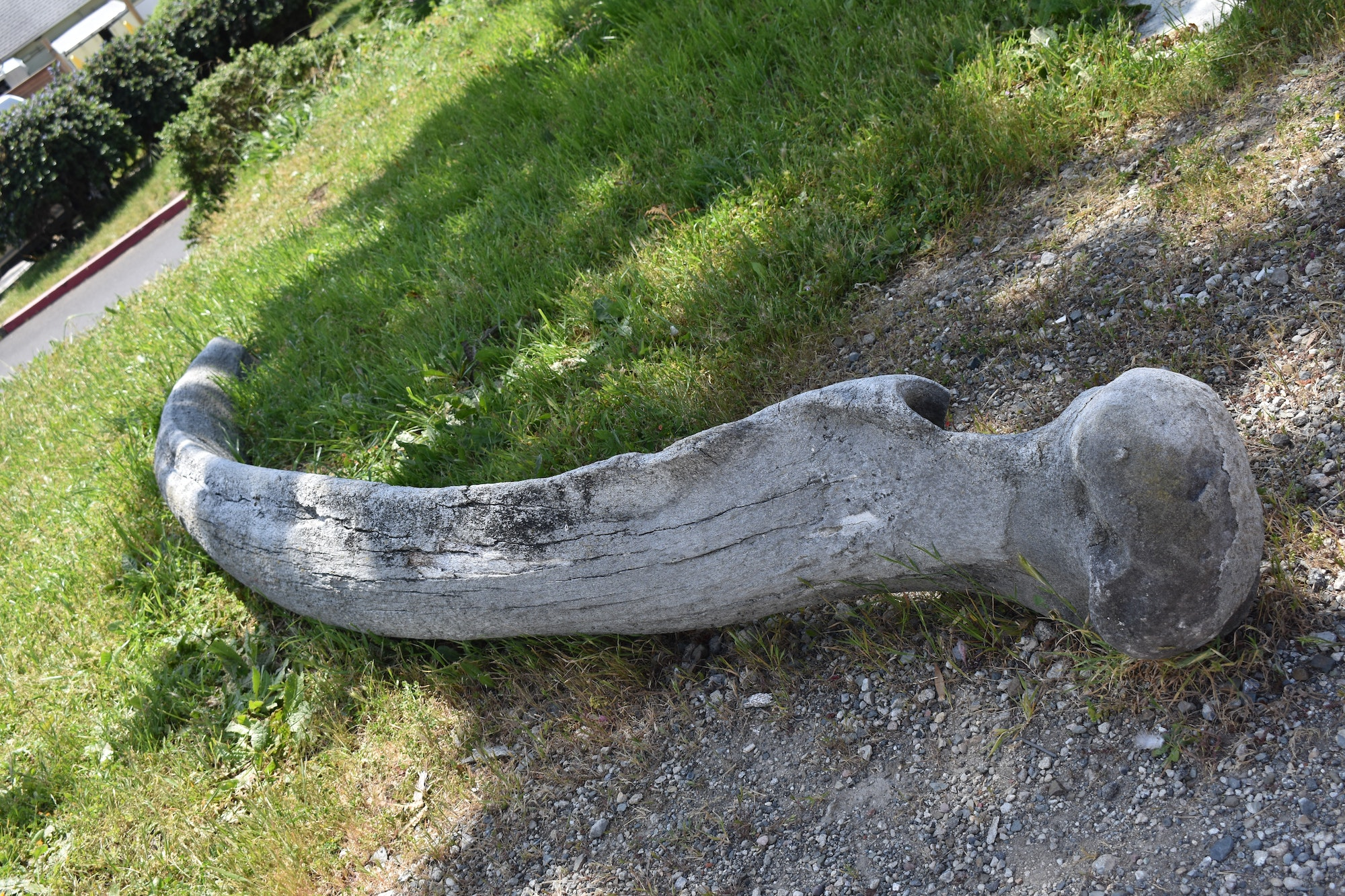 Whale bone - Pillar Point Harbor
