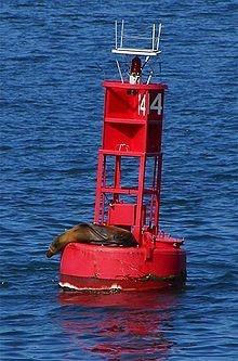 May contain: sea life, animal, mammal, and seal