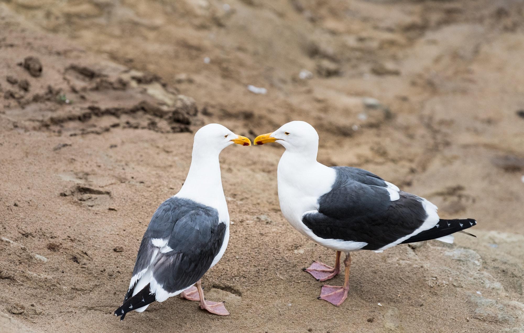 May contain: bird, animal, beak, and seagull