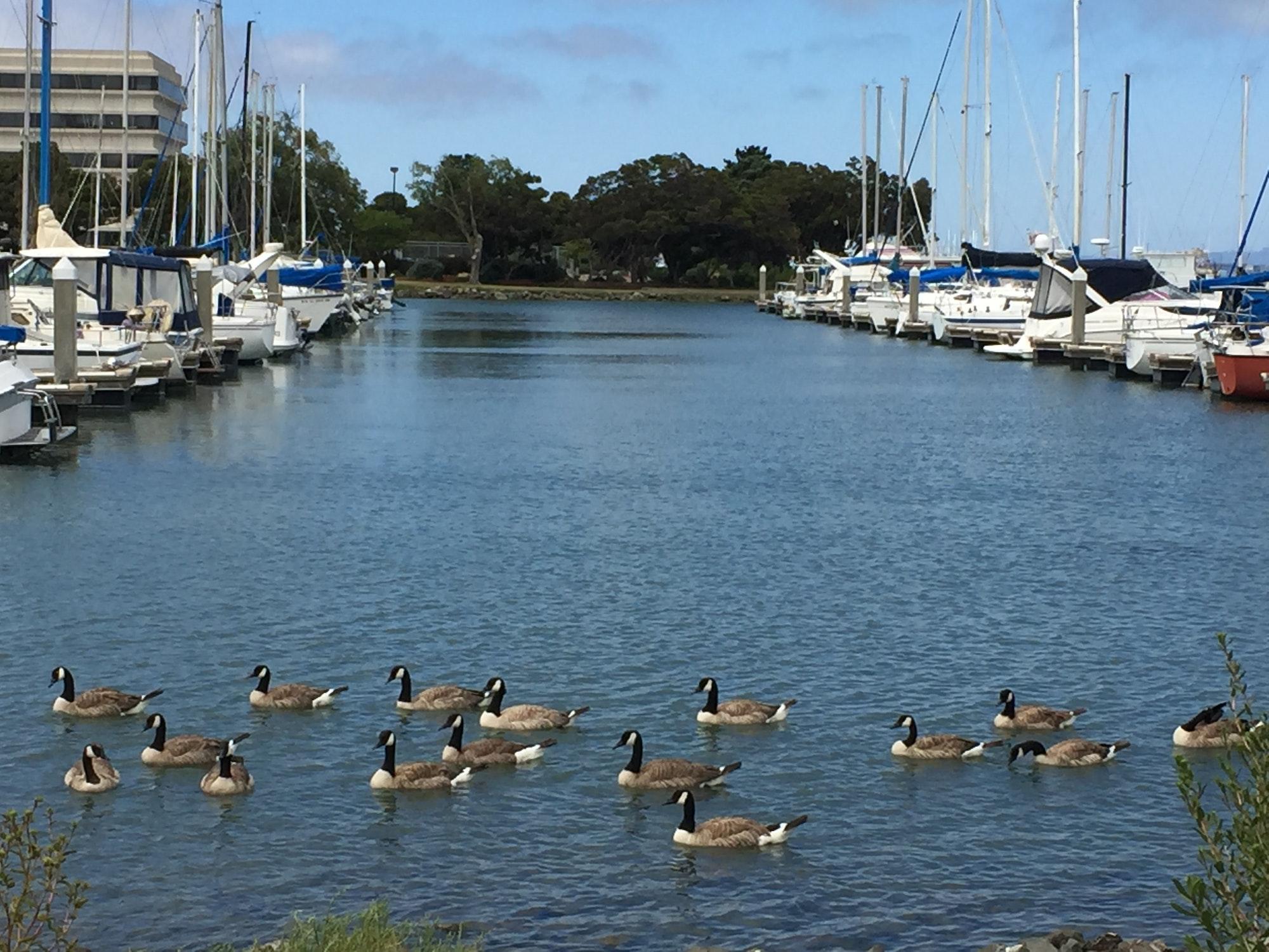 May contain: water, vessel, transportation, vehicle, watercraft, waterfront, marina, bird, animal, pier, port, and dock
