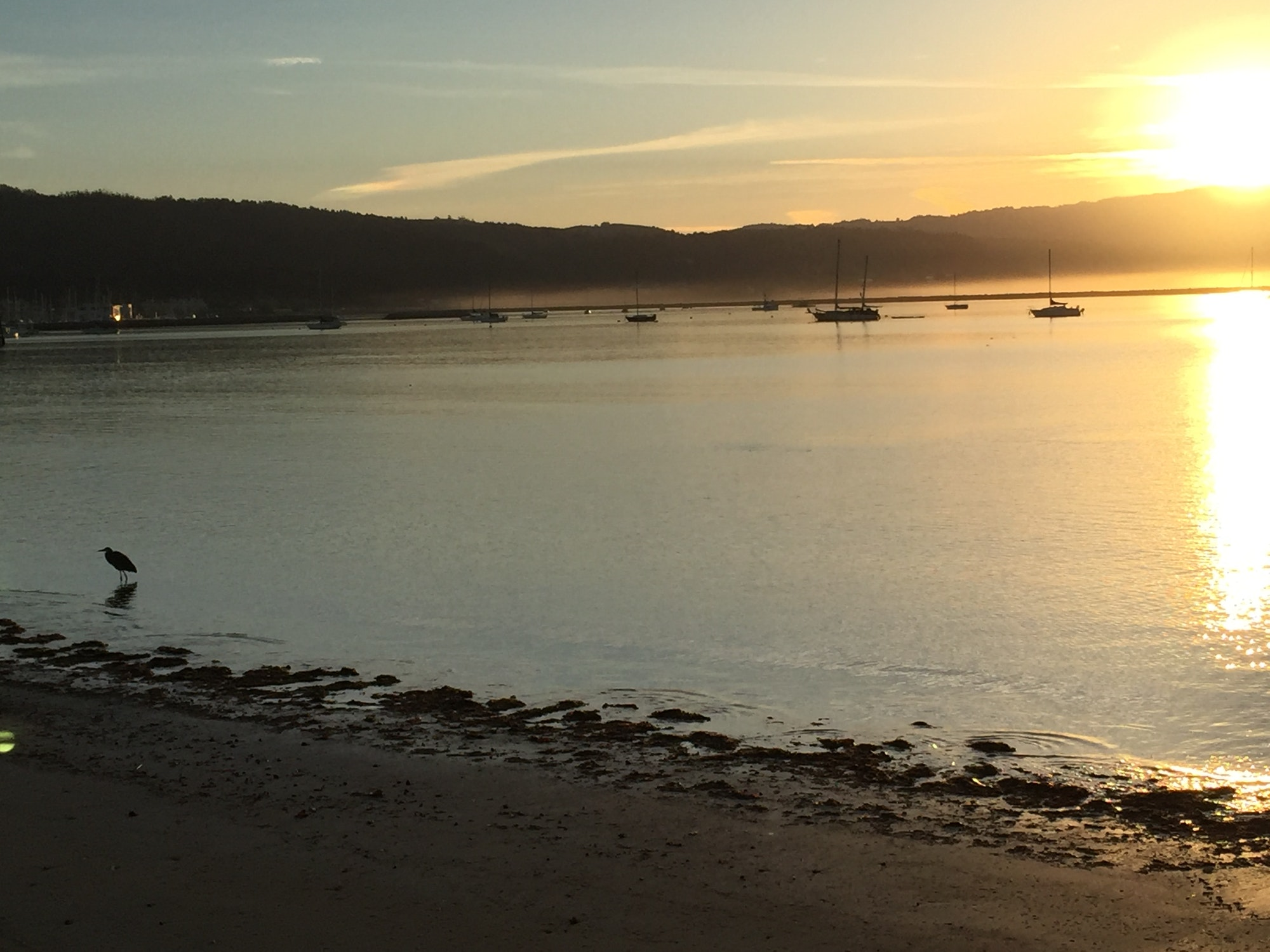 Pillar Point Harbor Sunrise