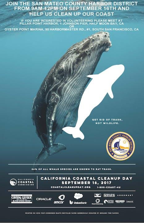 May contain: animal, sea life, and mammal