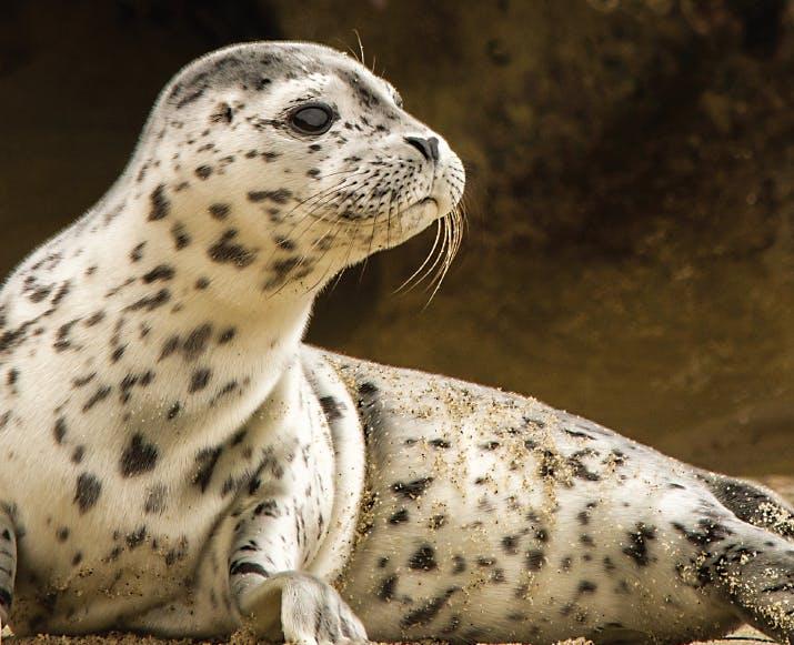Image Sea Lion