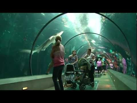 Oregon Coast Aquarium tank view hallway