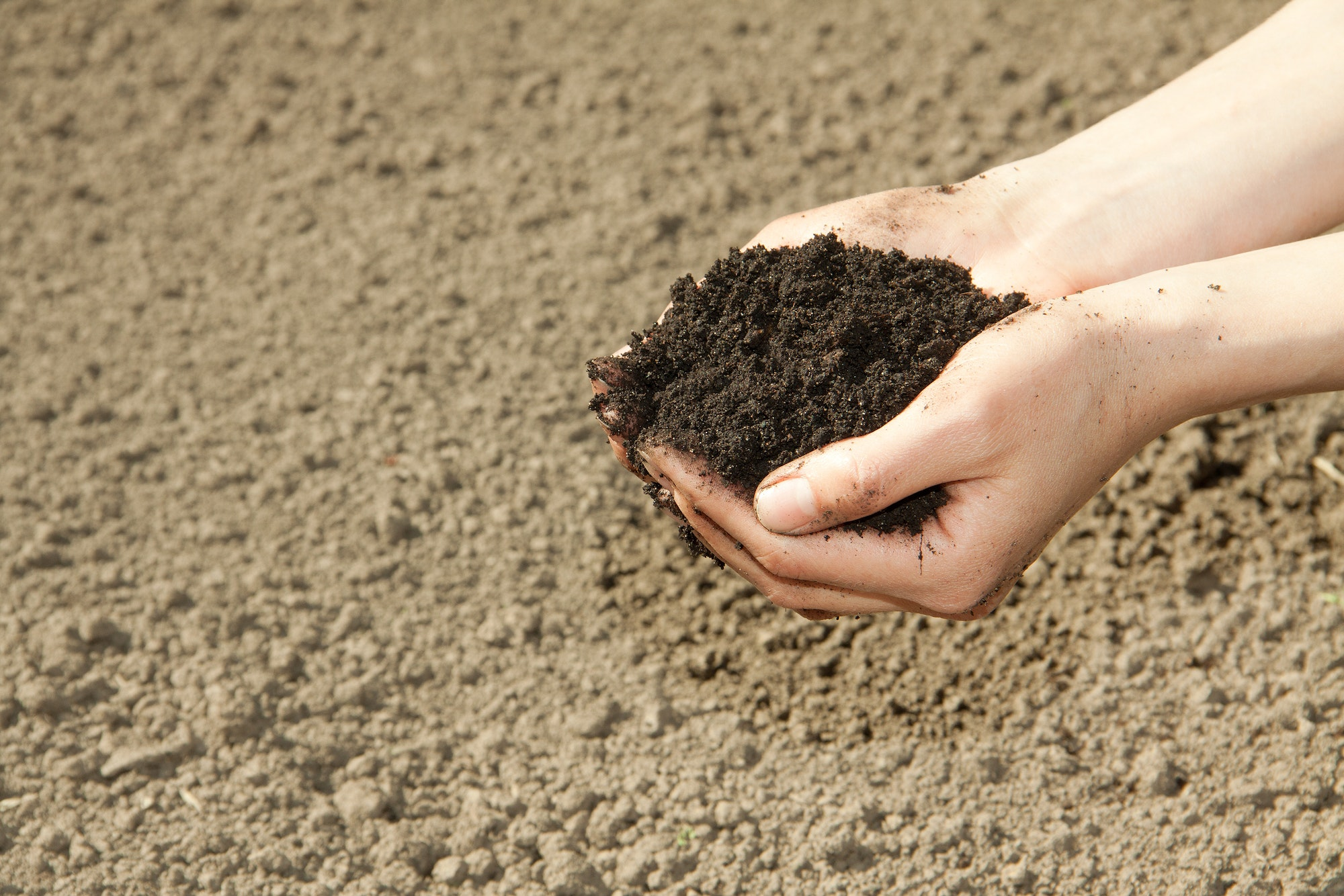 May contain: soil, outdoors, nature, sand, ground, human, and person