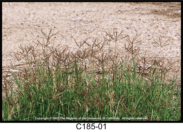 May contain: grass, plant, vegetation, ground, outdoors, nature, land, and lawn