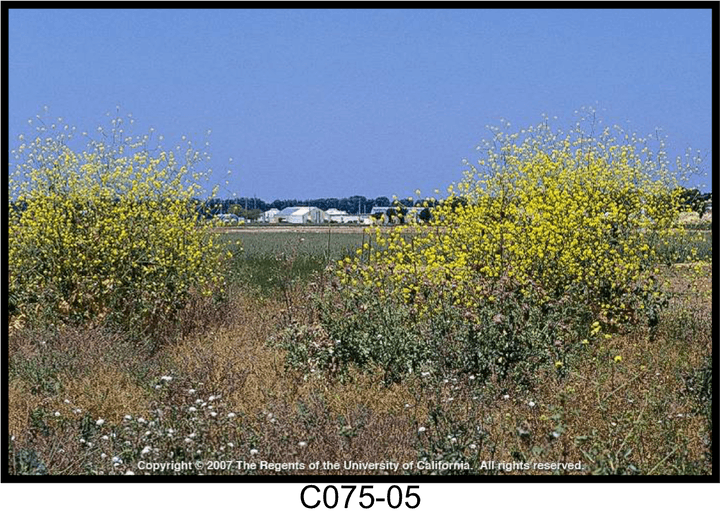May contain: nature, outdoors, grassland, field, and countryside