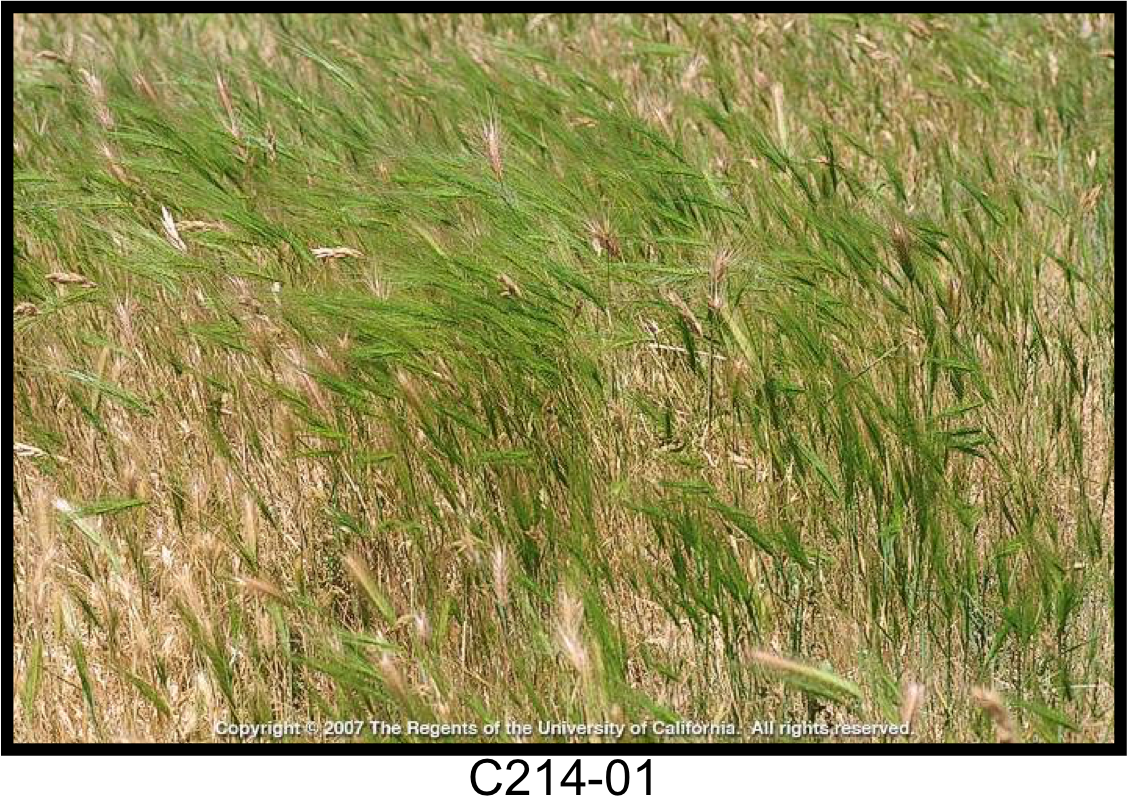 May contain: grass, plant, agropyron, lawn, and vegetation