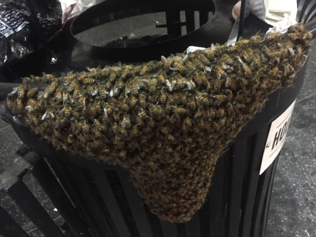 Bee swarm on trash can