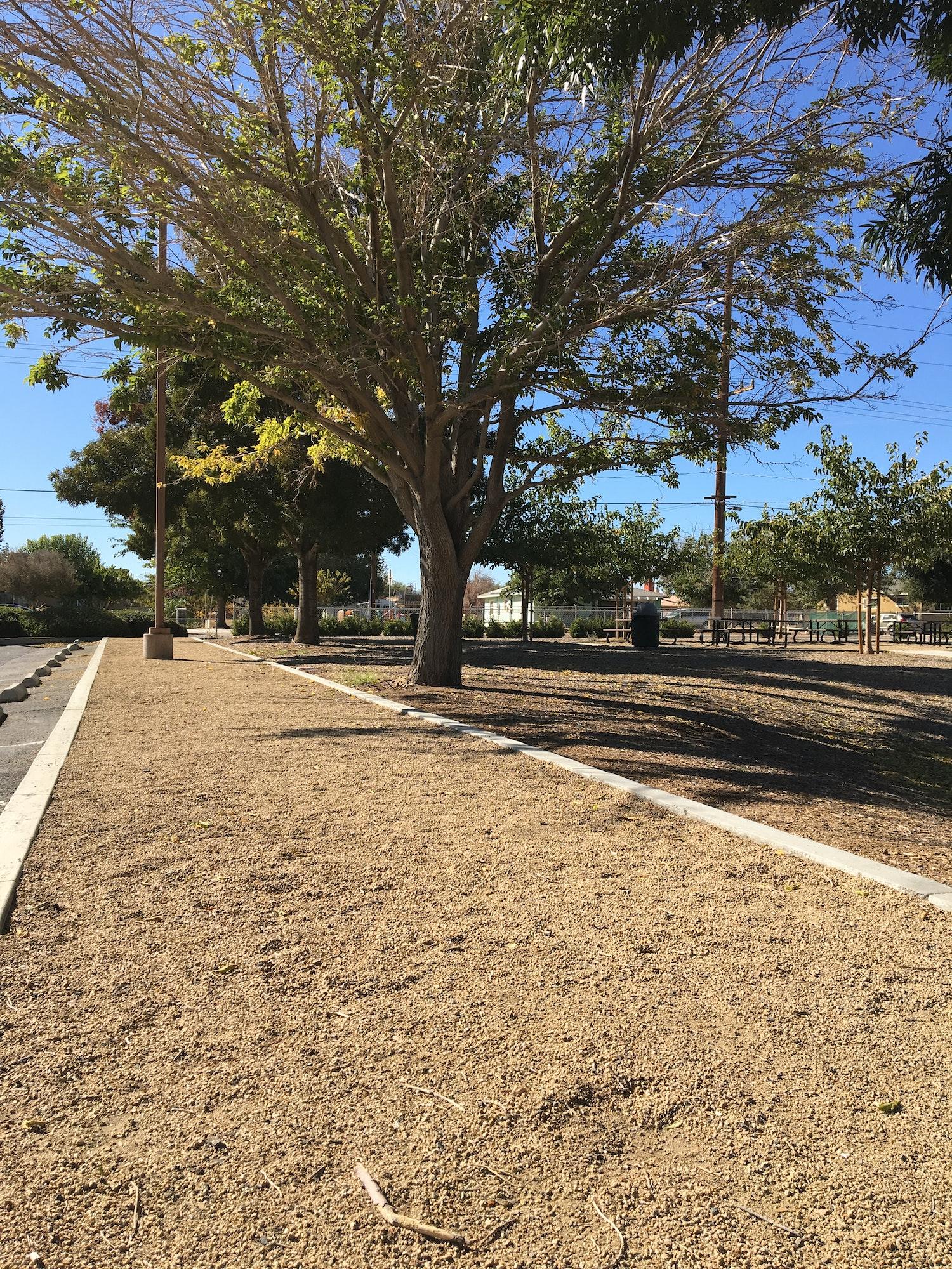 May contain: road, asphalt, tarmac, plant, tree, dirt road, and gravel