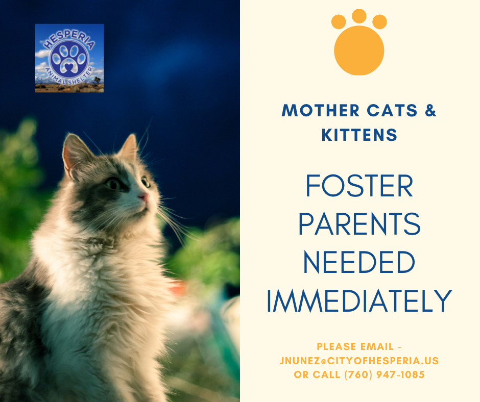 Hesperia Animal Shelter; Mother cats and kittens Foster parents needed immediately. Please email jnunez@cityofhesperia.us or call (760) 947-1085