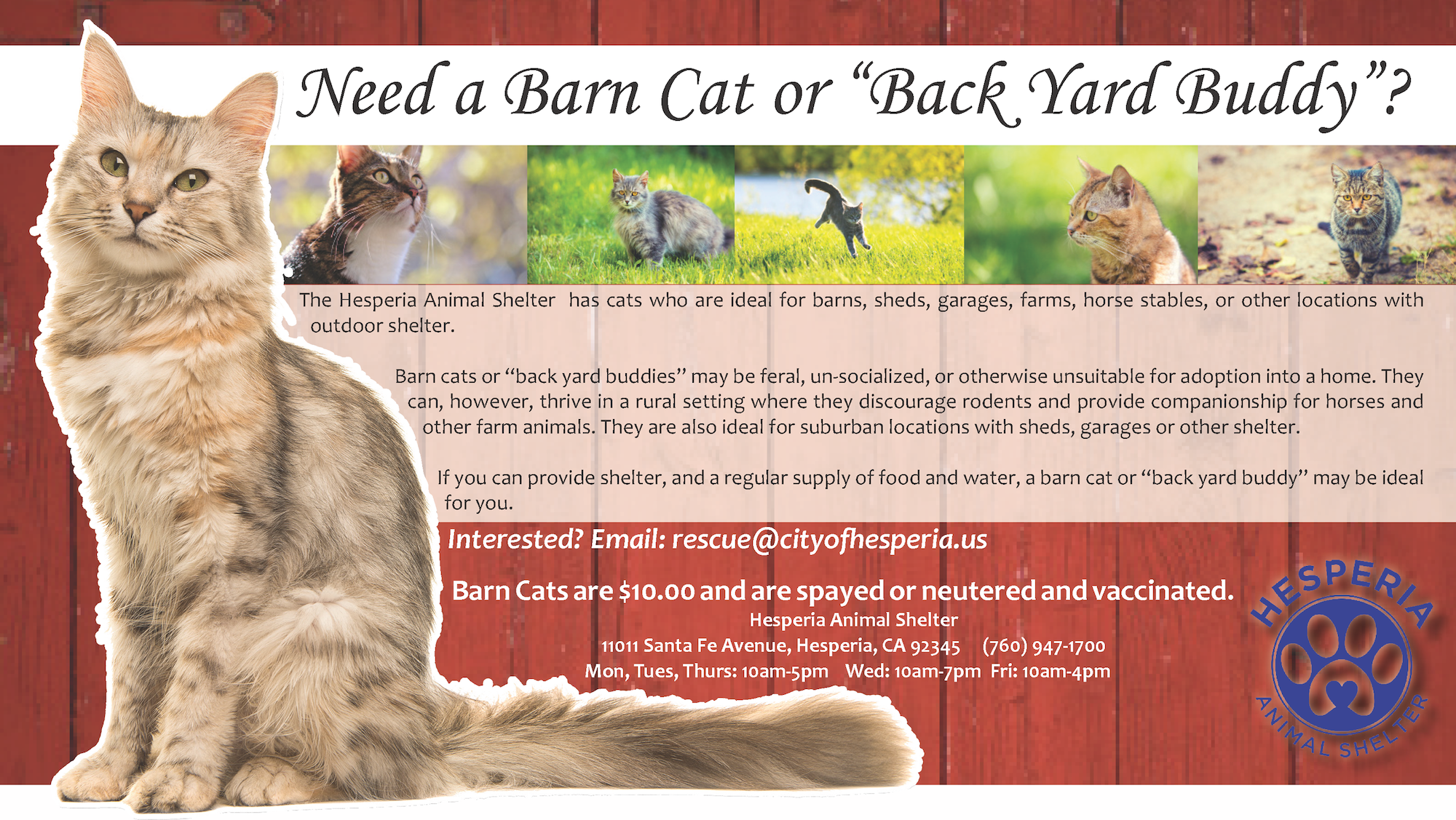 adopt a barn cat or back yard buddy from hesperia animal shelter
