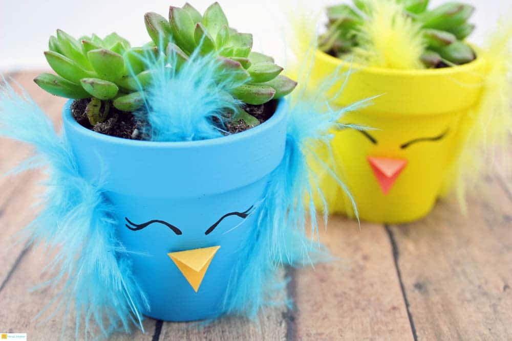 Spring chick succulent planters