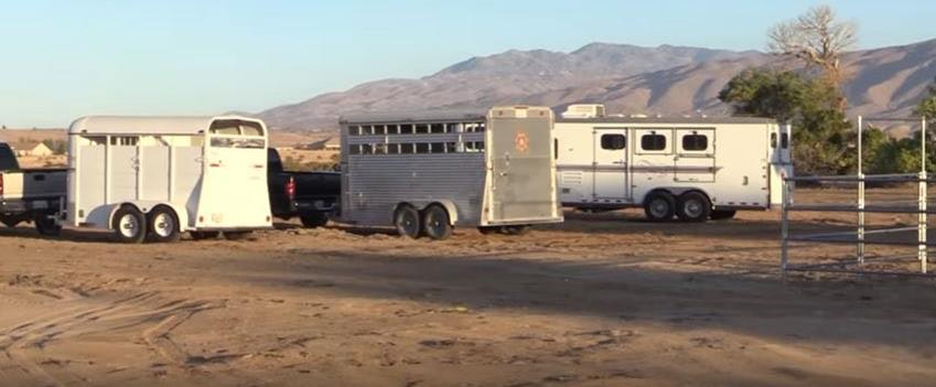 Horse trailers hitched to trucks