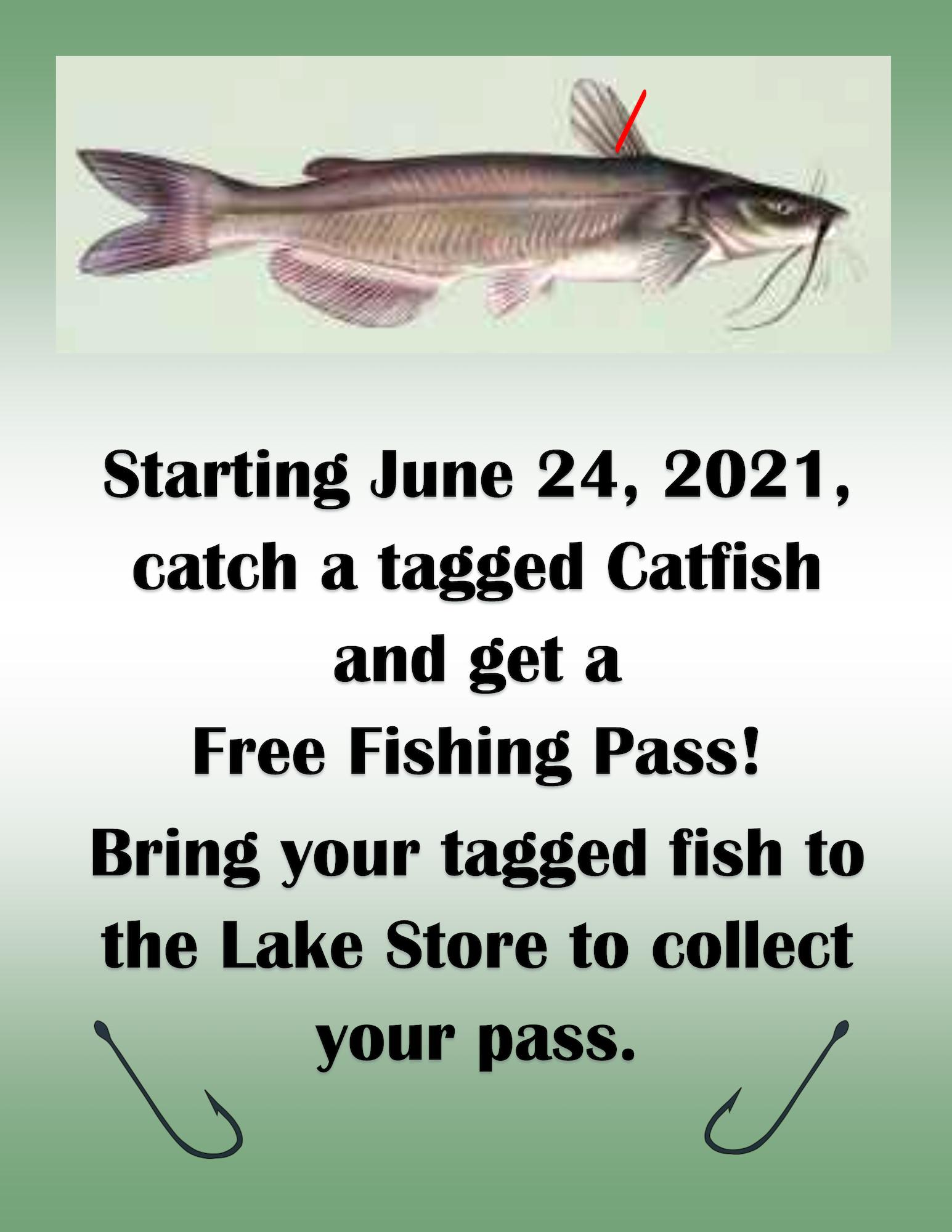 May contain: mullet fish, animal, fish, and sea life