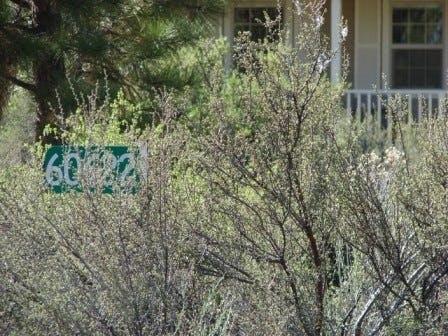 May contain: vegetation, plant, bush, and tree