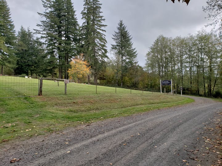 May contain: dirt road, gravel, road, plant, tree, abies, fir, tarmac, and asphalt