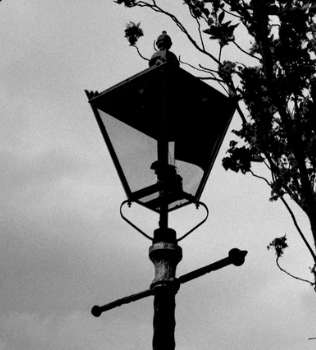 May contain: lamp and lamp post