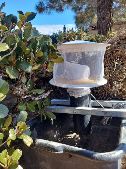 Gravid Trap that lures in egg laying mosquitoes