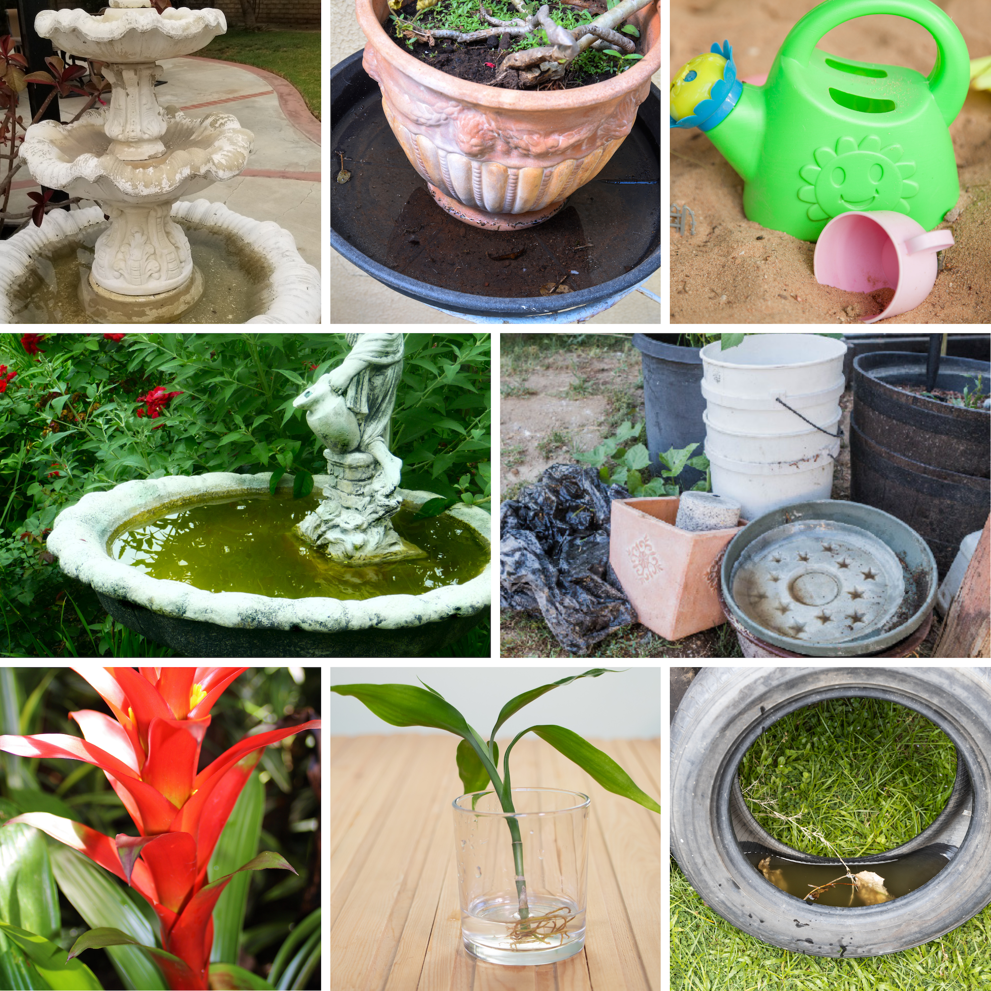 Images of various sources where Aedes mosquitoes thrive: Plant saucers, water fountains, junk, childrens toys, aquatic plants and so on.