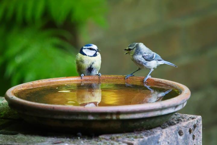Birdbath containing standing water
