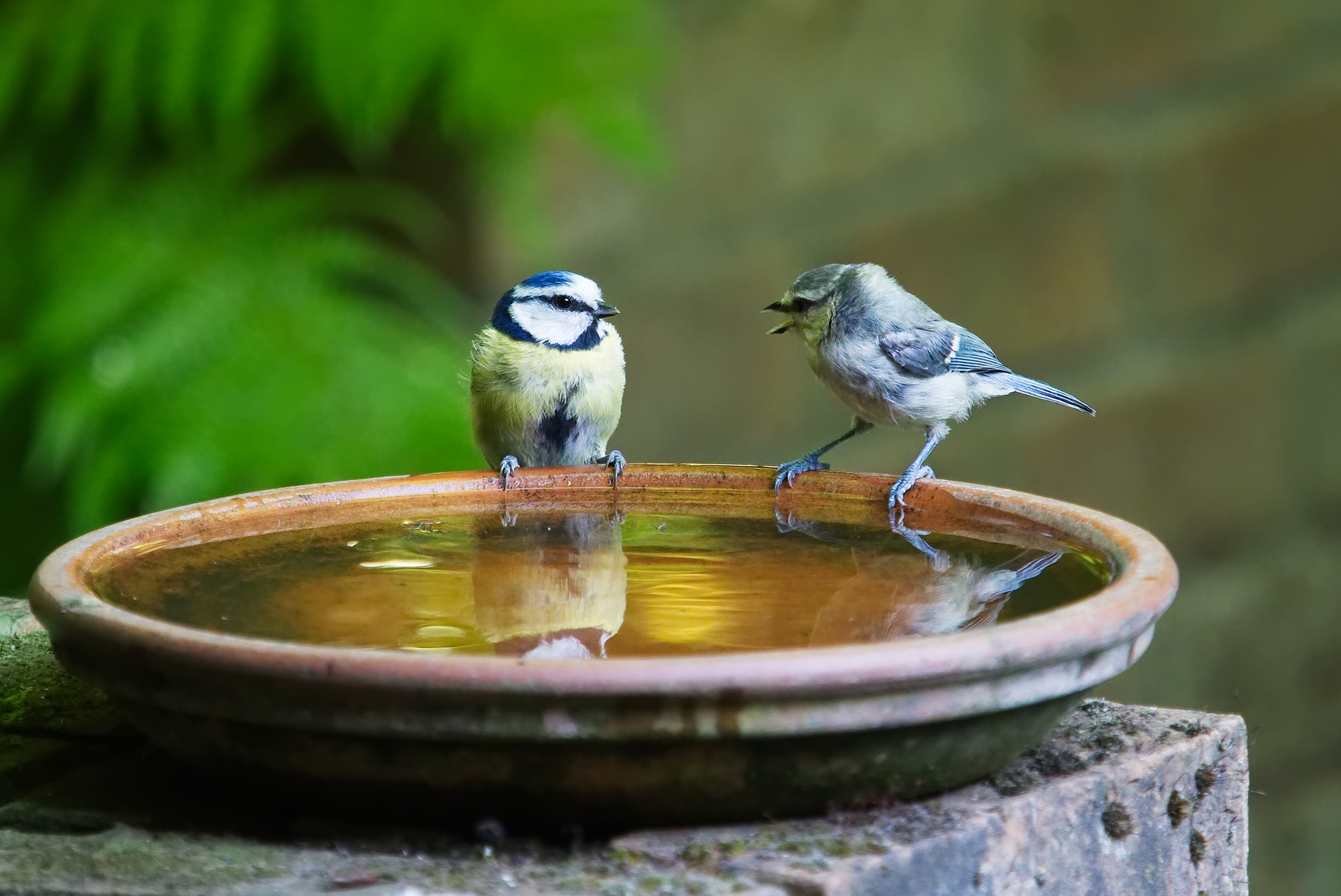 Birdbath containing standing water