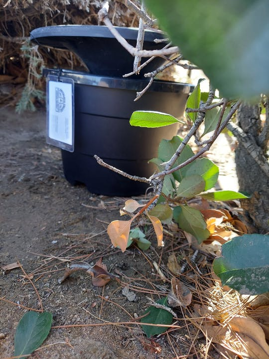 Image of an In2Care mosquito trap