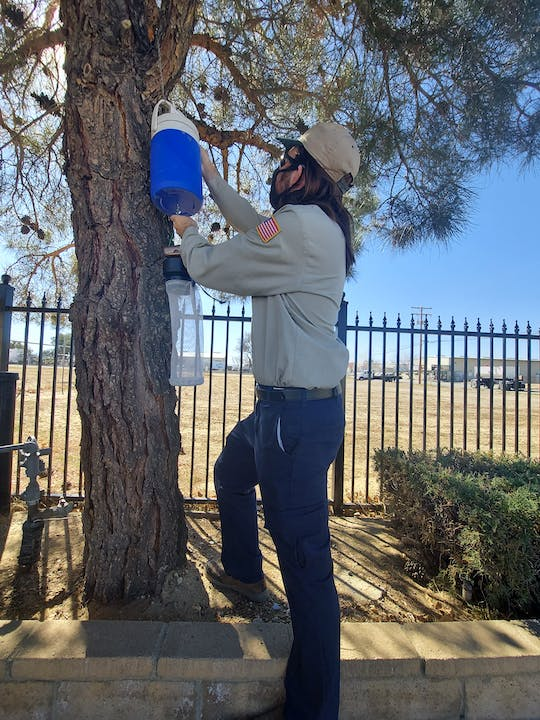 Technician hanging a CO2 Mosquito Trap