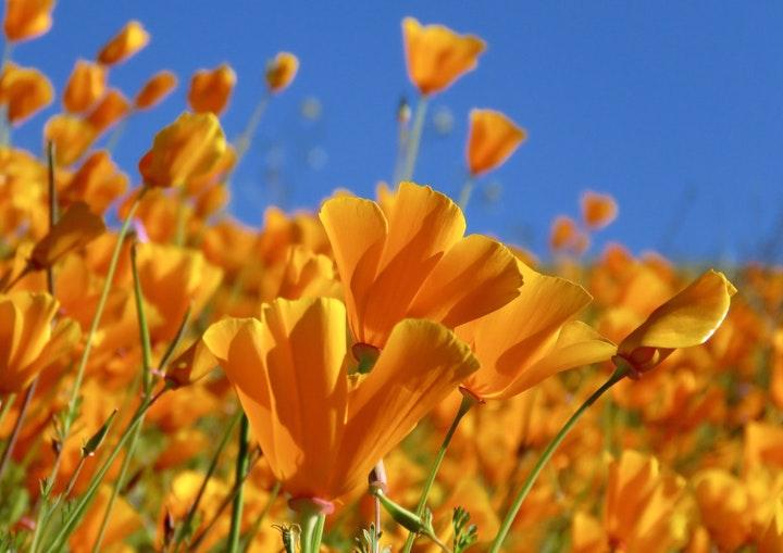 May contain: plant, petal, blossom, flower, geranium, and pollen