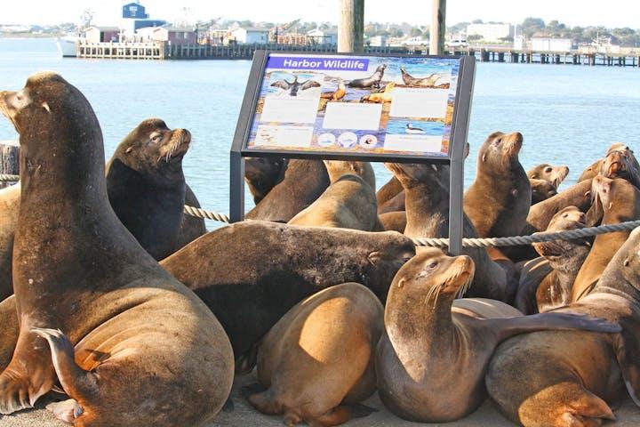 May contain: sea lion, mammal, sea life, and animal