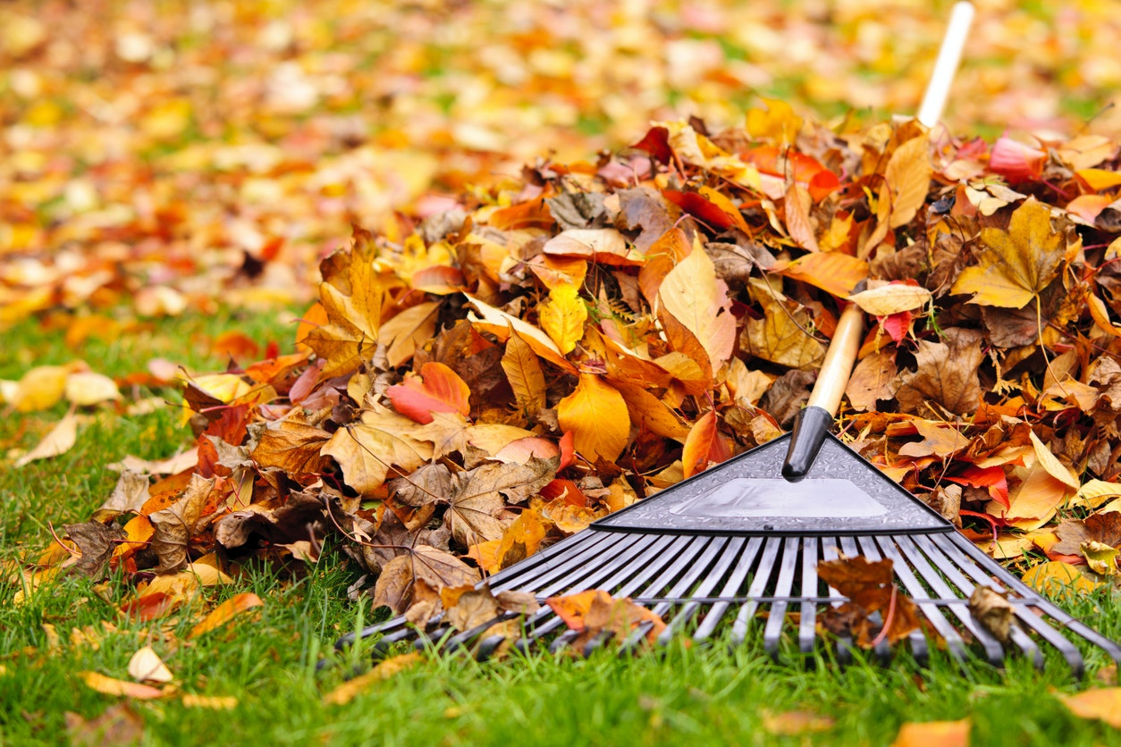 May contain: rake, leaf, and plant