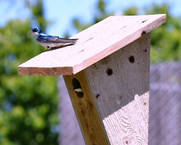 May contain: bird, animal, jay, mailbox, letterbox, bluebird, and blue jay