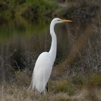 May contain: bird, waterfowl, animal, crane bird, ardeidae, and heron